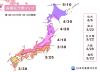 일본벚꽃 개화시기