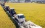 우울한 풍년…쌀 예상 생산량, 평년보다 6% 많아