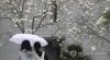 [오늘날씨] 전국 흐리고 곳곳에 봄비…'낮 기온 최고 17도'