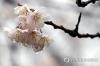[주말날씨] 흐린 주말…중부·남부에 '봄비 소식'