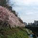 서울 서초구 반포천 벚꽃길